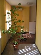 3х кімнатна квартира