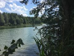 Фірма в Литві, Друскінінкай, разом з землею біля озера, під готель