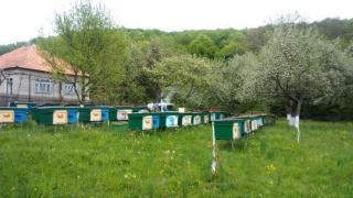 Карпатські бджоломатки