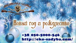 Новорічний відпочинок на базі відпочинку в Полтавській області