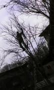 Обрізка фруктових дерев в Донецьку