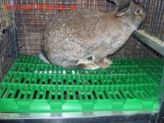 Пластиковий настил для кроликів
