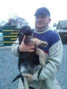 Продам цуценята східно-європейської вівчарки