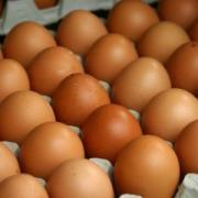 Продам яйце інкубаційне, а також добовий молодняк