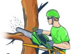 Спил дерев, спиляти, спилювання, валка, знесення будівель, зрізання