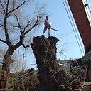 Спил дерева Київ. Видалення дерев Київ. Дроблення гілок