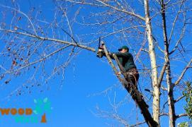Спил дерева. Вирубка, обрізка дерев. Корчування пнів