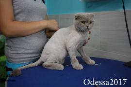 Стрижка котів без наркозу. Грумер Ірина Підгірна