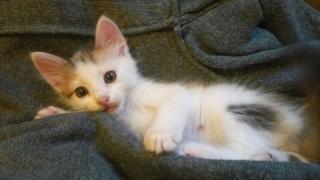 Трьохмасні кошенята хлопчики, дівчинка