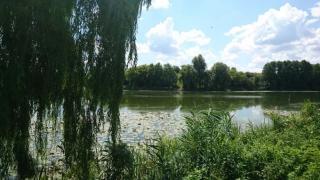 Участок на берегу реки, 27 сот, с. Яблоновка Белоцерковский р-н