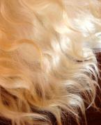 Волосся, купимо натуральні незабарвлені волосся